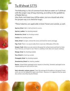 Tu B'shvat fruit checking list1